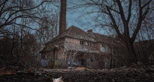 Hilangnya Kucing di Rumah Kosong (Tilgnerpictures/Pixabay dan Canva)