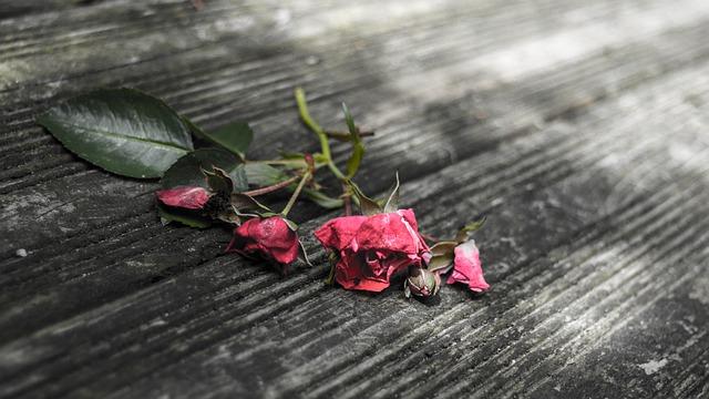 Cinta Gila [DrMedYourRussens from Pixabay]